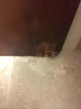 Holiday Inn Express Harrisburg East: Tons of water damage in the bathroom floor and door; this picture is the bathroom door.