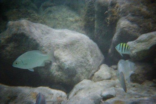 Iberostar Rose Hall Beach Hotel: Underwater