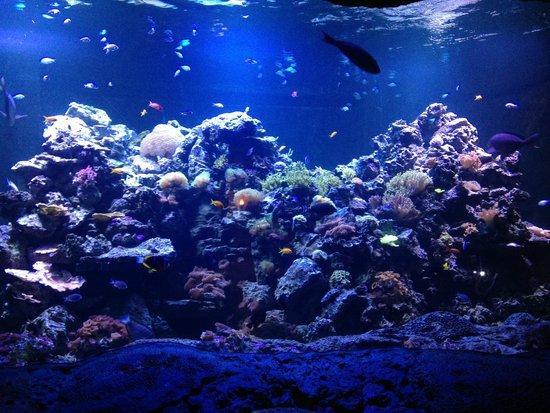 Small Coral Reef Tank Picture Of Virginia Aquarium