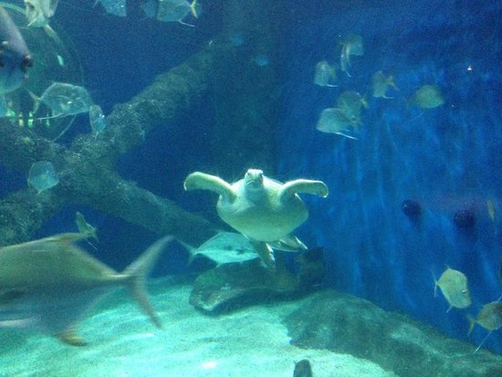 Cottonmouth Water Moccasin Picture Of Virginia Aquarium
