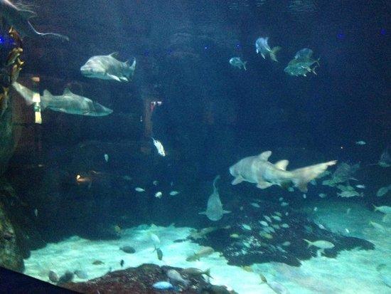 Virginia Aquarium Marine Science Center Shark Tank