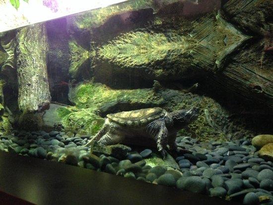 Shark Tank Picture Of Virginia Aquarium Marine Science