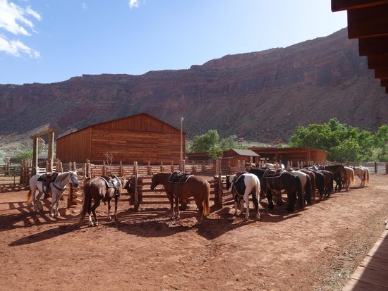 Red Cliffs Lodge : Stables