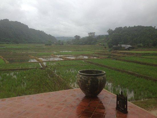 Manee Dheva Resort & Spa: beautiful rice paddies!