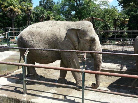 Giardino Zoologico di Pistoia : ELEFANTE