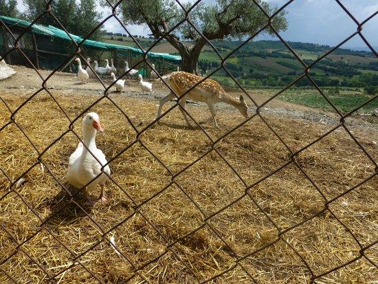 Agriturismo il Rosciolo: Animali