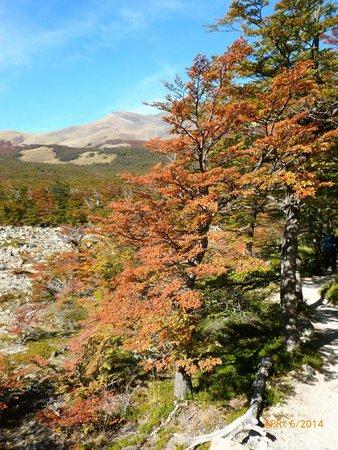 Hosteria Lago Viedma: Hike in the vicinity