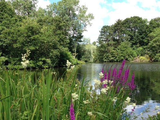 Thornton Manor: Lake