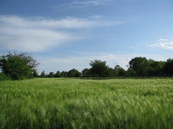 Agriturismo Il Vecchio Fienile: le coltivazioni