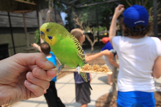 Racine Zoo : Feeding the budgies, rosellas and cockateils is $2.