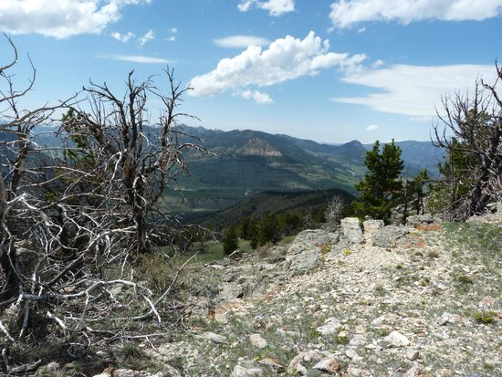 Jackson Hole Wildlife Safaris - Day Tours: SOMEWHERE NEAR CHIEF JOSEPH HIGHWAY