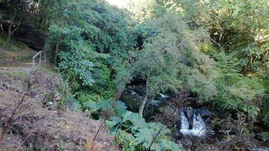Crarae Garden Argyll: Crarae, 12 October 2014 2