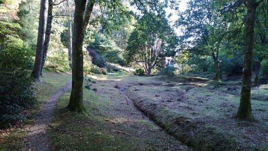 Crarae Garden Argyll: Crarae, 12 October 2014 3