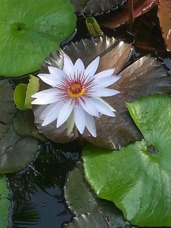Pinecrest Gardens: Bella flor