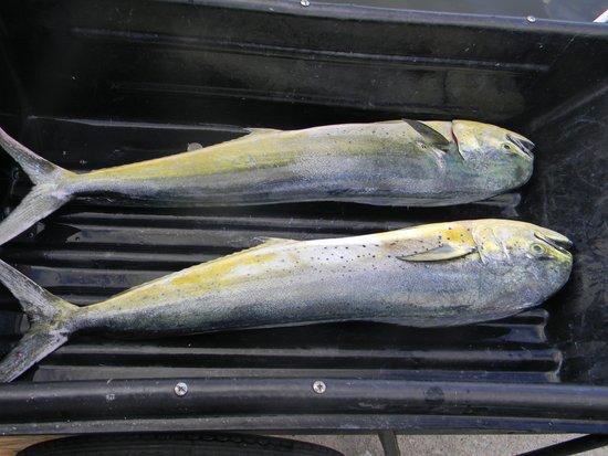 Charleston Sport Fishing: Fish