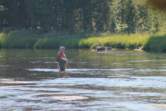 Fly fishing picture of yellowstone national park for Yellowstone park fishing report