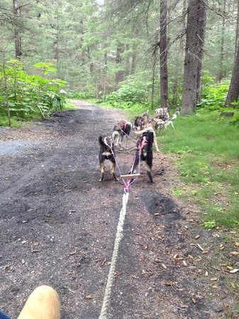 Turning Heads Kennel: Running the pups