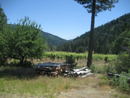 Trinity Center, CA: Vineyards at Alpen Cellars