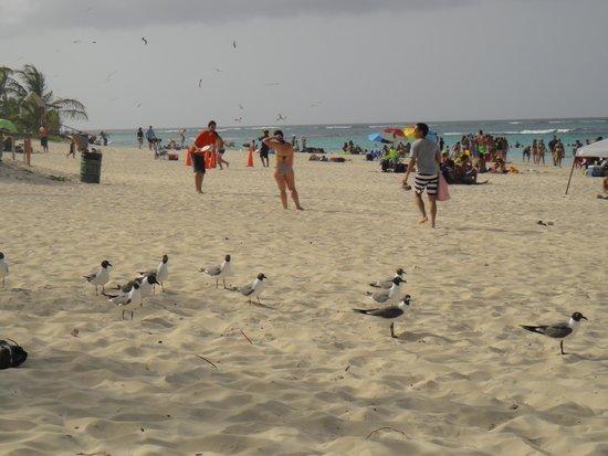 Playa Flamenco: Gaviotas