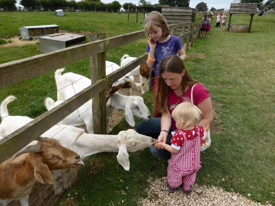 Cotswold Farm Park: So many friendly goats