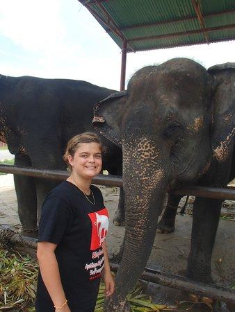 Elephantstay: Hanging out with Rumruay