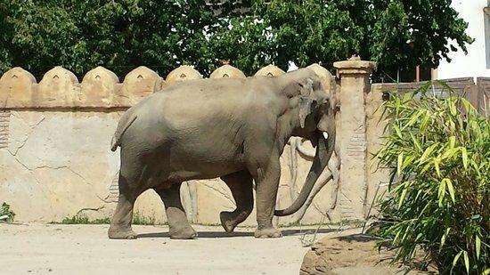 Zoologischer Garten Leipzig: Elefanten Gehege Juli 2014