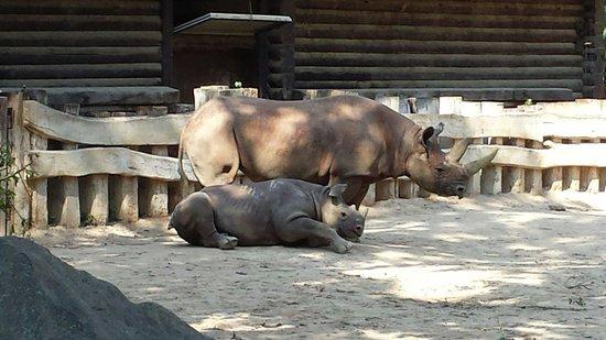 Zoologischer Garten Leipzig: Nashorn Gehege Juli 2014