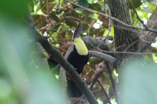 Tulemar Bungalows & Villas: toucan