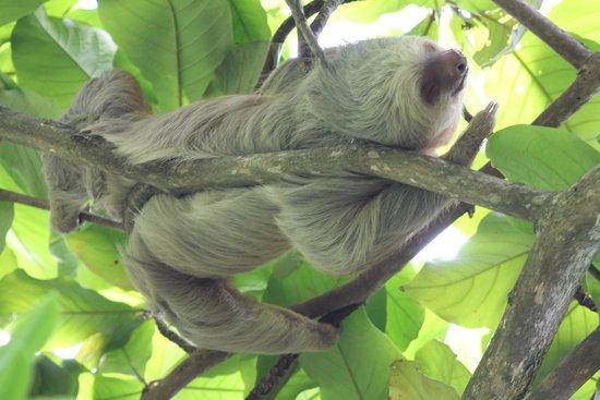 Tulemar Bungalows & Villas: sloth