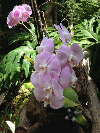 The Residence: Orchid Garden
