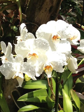 The Residence : Orchid Garden