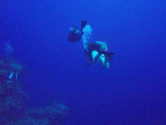 The north wall in grand cayman photo de deep blue divers - Dive deep blue ...