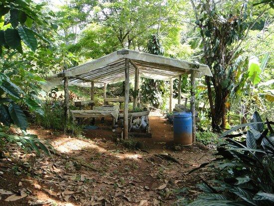 Las Nubes Natural Energy Resort: une partie du potager