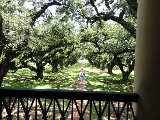 Oak Alley Plantation: Oak Alley