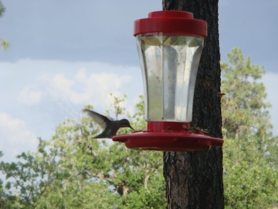 Whispering Pines Bed and Breakfast: Feeders on the Deck overlooking Prescott Valley