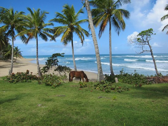 Natura Cabana Boutique Hotel & Spa : Beach with wild horses