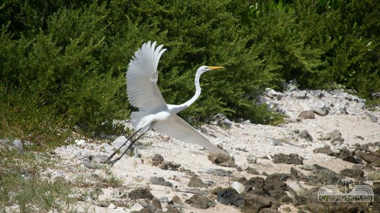 Virgin Islands Campground : Egret taking off from the beach