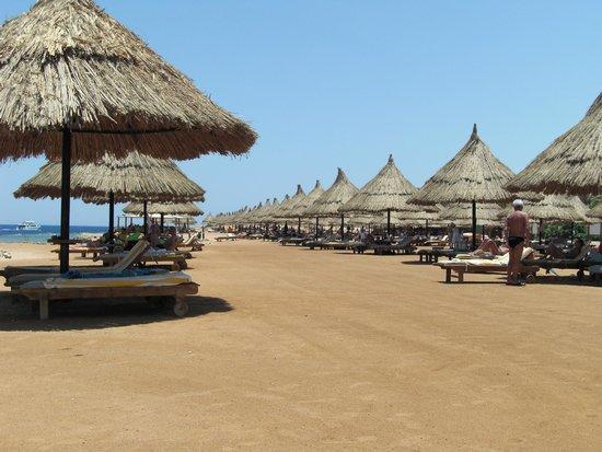 Sheraton Sharm Hotel, Resort, Villas & Spa: Beach