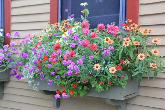 Korner Kottage Bed & Breakfast: gorgeous window boxes