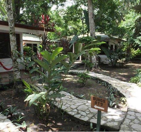 Hotel Jaguar Inn Tikal: Hotel, jardin