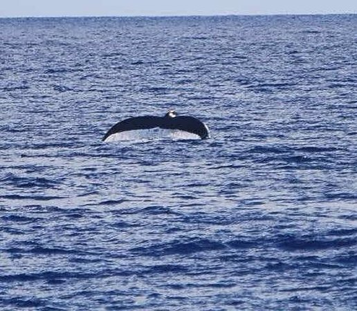 Moorea Golf Lodge : Whales