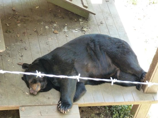 Bear Hollow Zoo: Bear