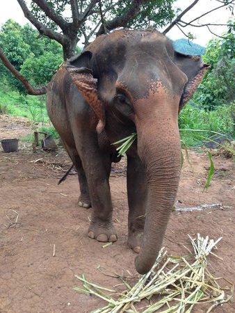 Patara Elephant Farm - Private Tours : My elephant for a day!