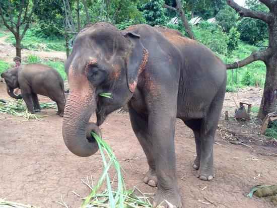 Patara Elephant Farm - Private Tours : Didi Boichan!