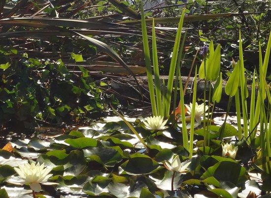 Munro's B & B: The garden lily pond