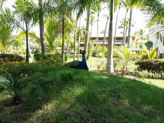 Sirenis Punta Cana Resort Casino & Aquagames: Hôtel