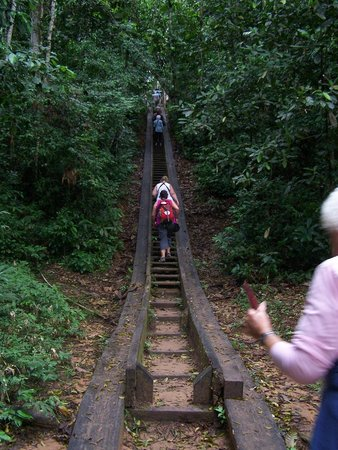 Posada Amazonas: the 2nd set of stairs up to the resort