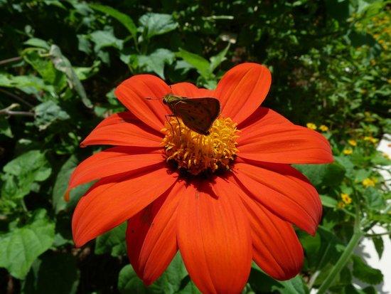 State Botanical Garden of Georgia: Ga State Botanical Gardens