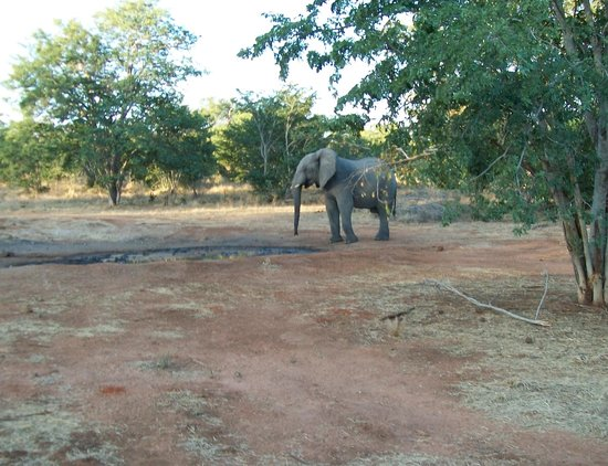 Ghoha Hills Savuti: Elephant at the water hole