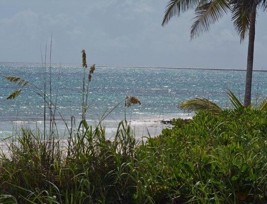 Pineapple Fields Resort: Eleuthera Beach